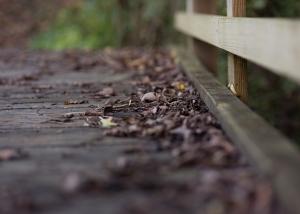 fall (12 of 16)