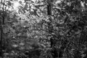 fall (16 of 16)